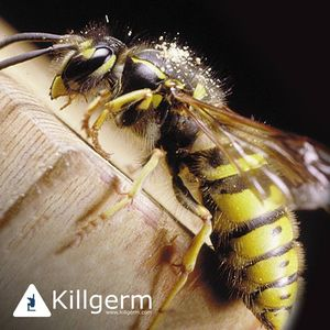 Protect Pest Control image 1