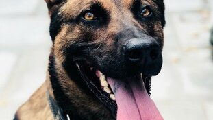 Politiehond grijpt vluchtende autokraker