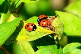 Kindergemeenteraad kiest voor insectenvriendelijke gemeente