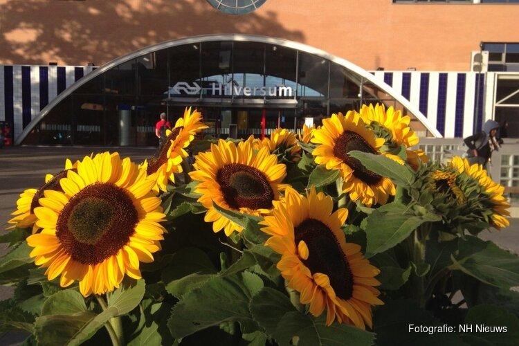 Hilversum weer vol zonnebloemen voor MH17-herdenking