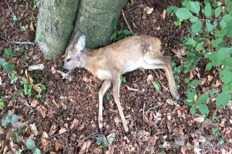 """Hond bijt jonge ree dood in het Gooise Spanderswoud: """"Het is regelmatig raak"""""""