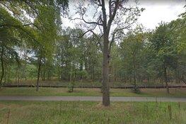 Omstreden bomenkap voor busbaan door Hilversum start maandag