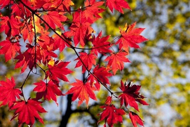 Herfst Detox bij divine-ayurveda