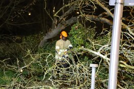 Grote omgevallen boom zorgt voor hinder in Hilversumse Meent