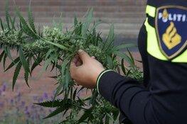 Hennepkwekerij met honderden planten gevonden in Hilversumse woning