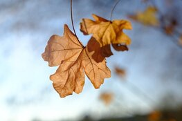 Komende week grotendeels droog herfstweer
